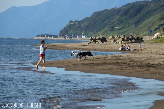 海で遊ぶ大型犬たち
