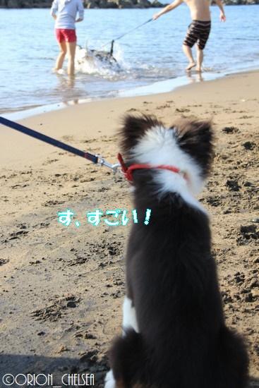 大型犬を見送るDawn太