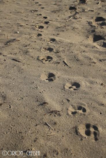 生後139日のDawn太の足跡