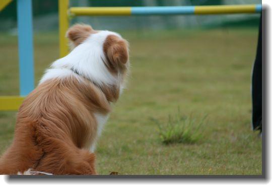 叔母犬パピコちゃん