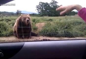 かわいいクマ