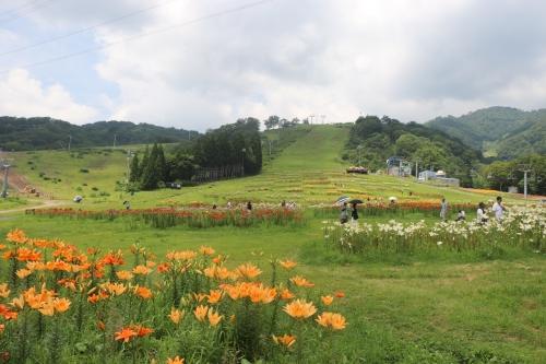 ダイナランドゆり園