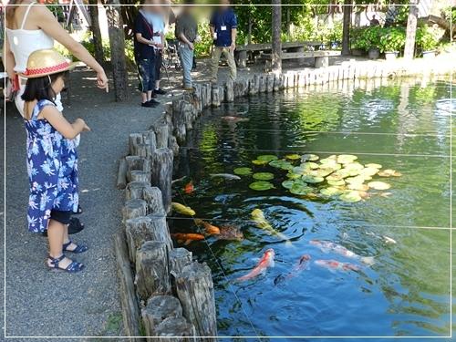 男山酒造ひょうたん池