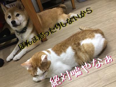 fc2blog_20180822232014a62.jpg