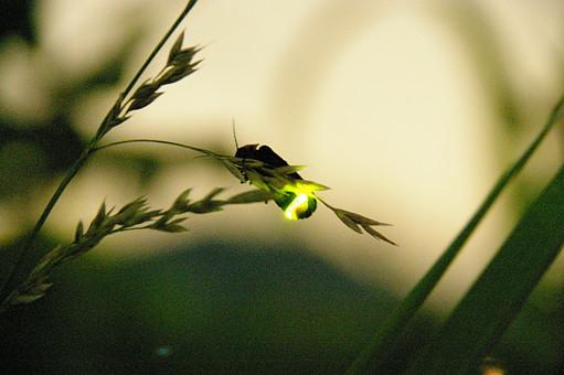 あまい(theme [firefly])~asuhana~