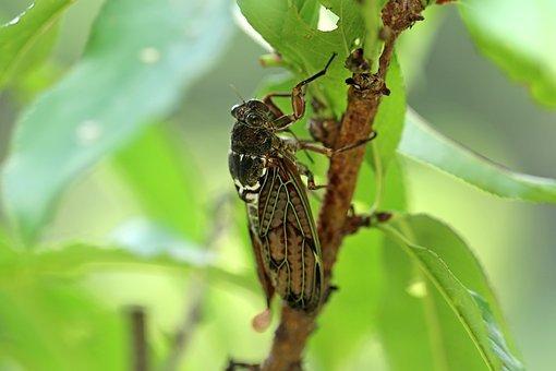 蝉(theme [cicada])~桃伽奈~