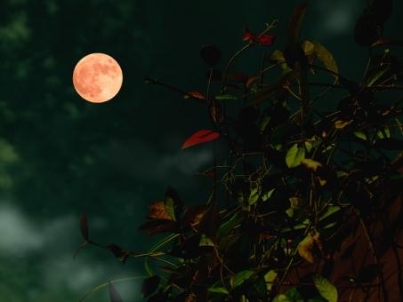 月が赤かったから……本当に完結編