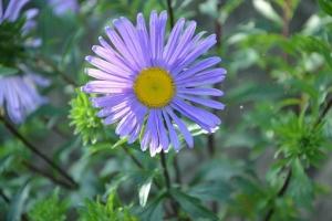 flower-2656755__340.jpg
