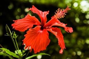 flower-2713868__340.jpg