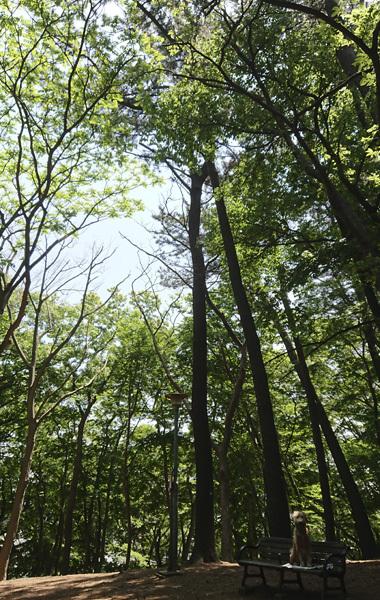 木洩れ日のベンチ