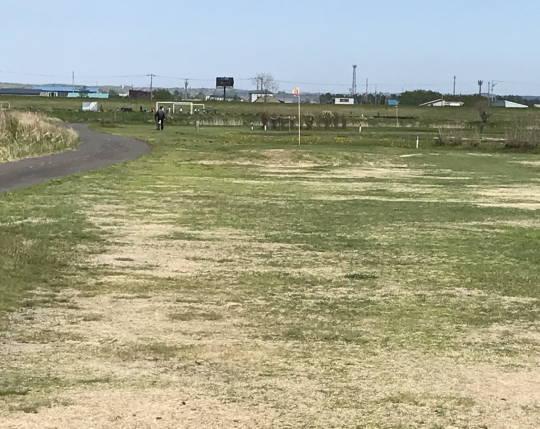 新釧路川河畔タンチョウ_アオサギ (2)