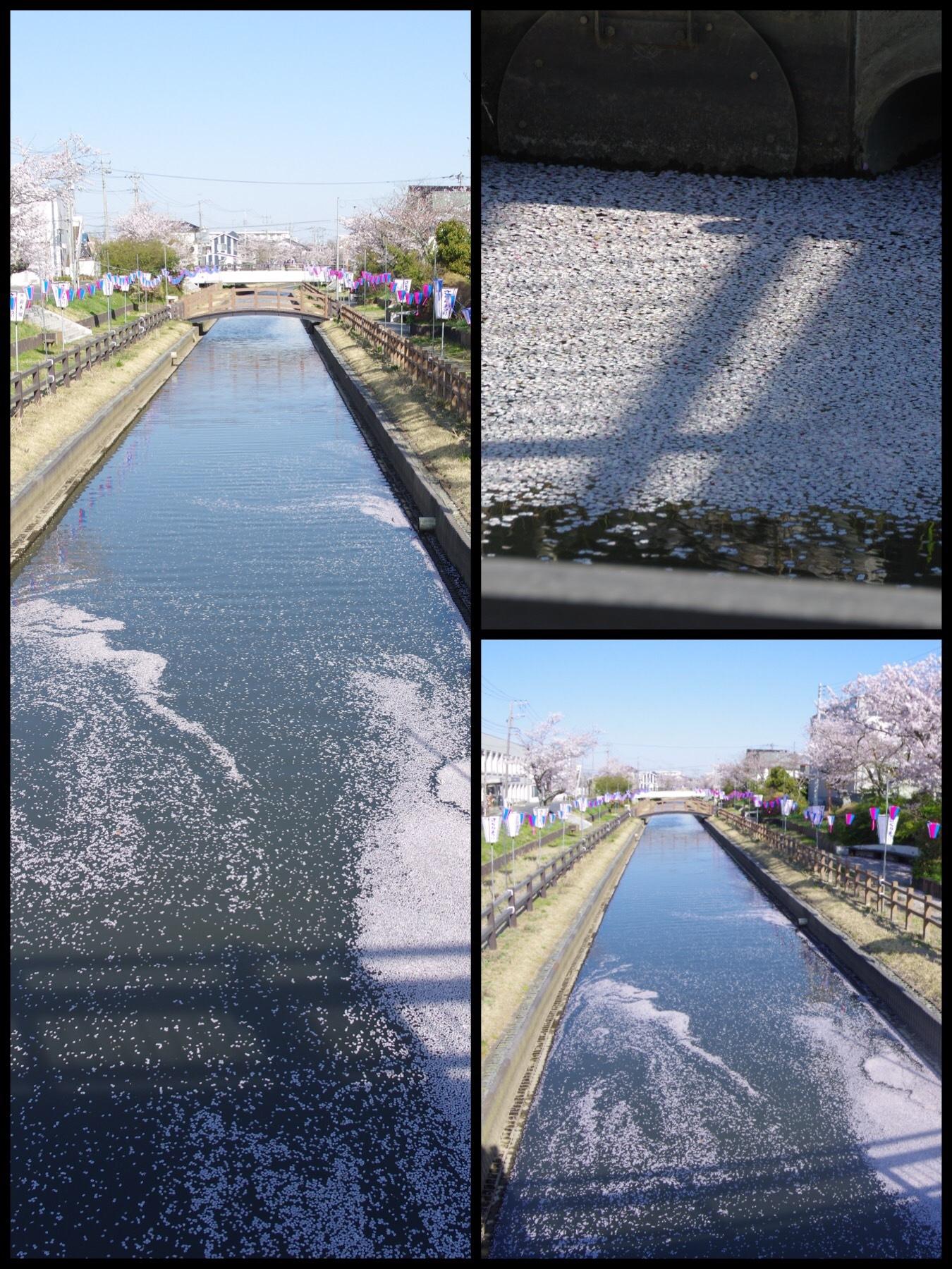 千葉 佐原 十間川桜 ザファームグランピング