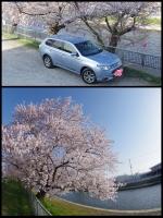 千葉 佐原 両総用水桜 ザファームグランピング