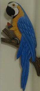 鳥コンゴウインコ