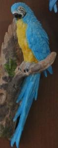 鳥コンゴウインコ2