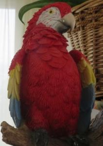 鳥コンゴウインコ3
