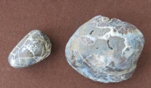 0820貝化石