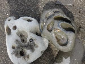 穿孔貝の巣穴