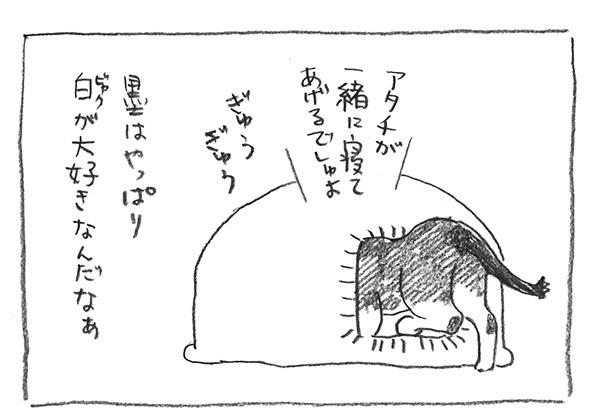 11-ビャク好き