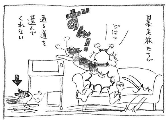 4-暴走族