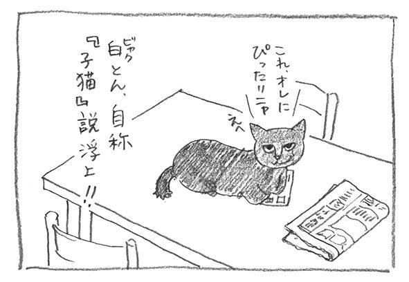 5-自称子猫