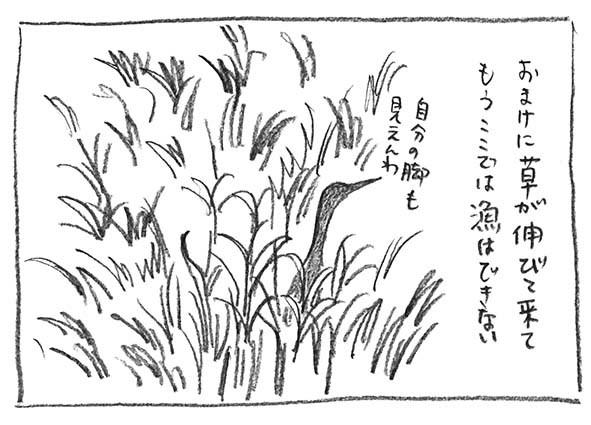 9-草伸びた