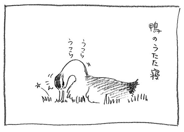 5-鴨うたた寝