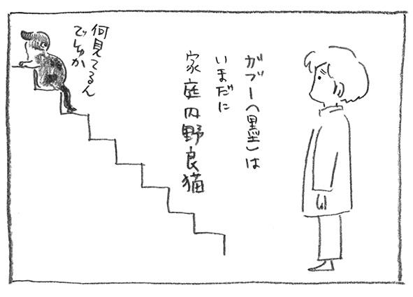 9-家庭内野良