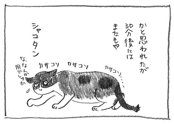 13-シャコタン
