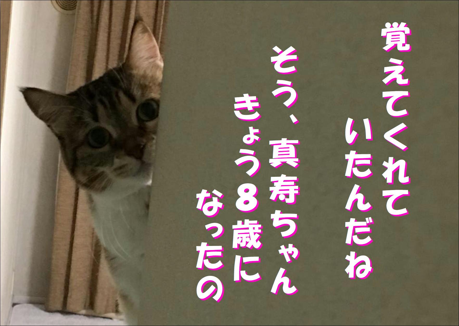 blog20180422_03.jpg