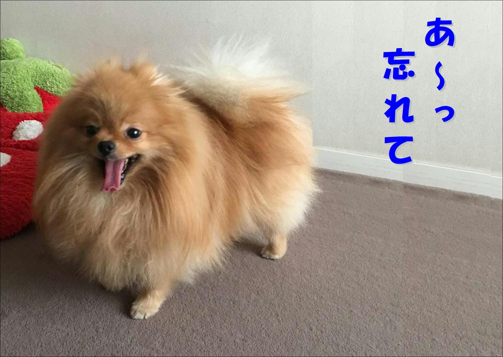blog20180422_04.jpg