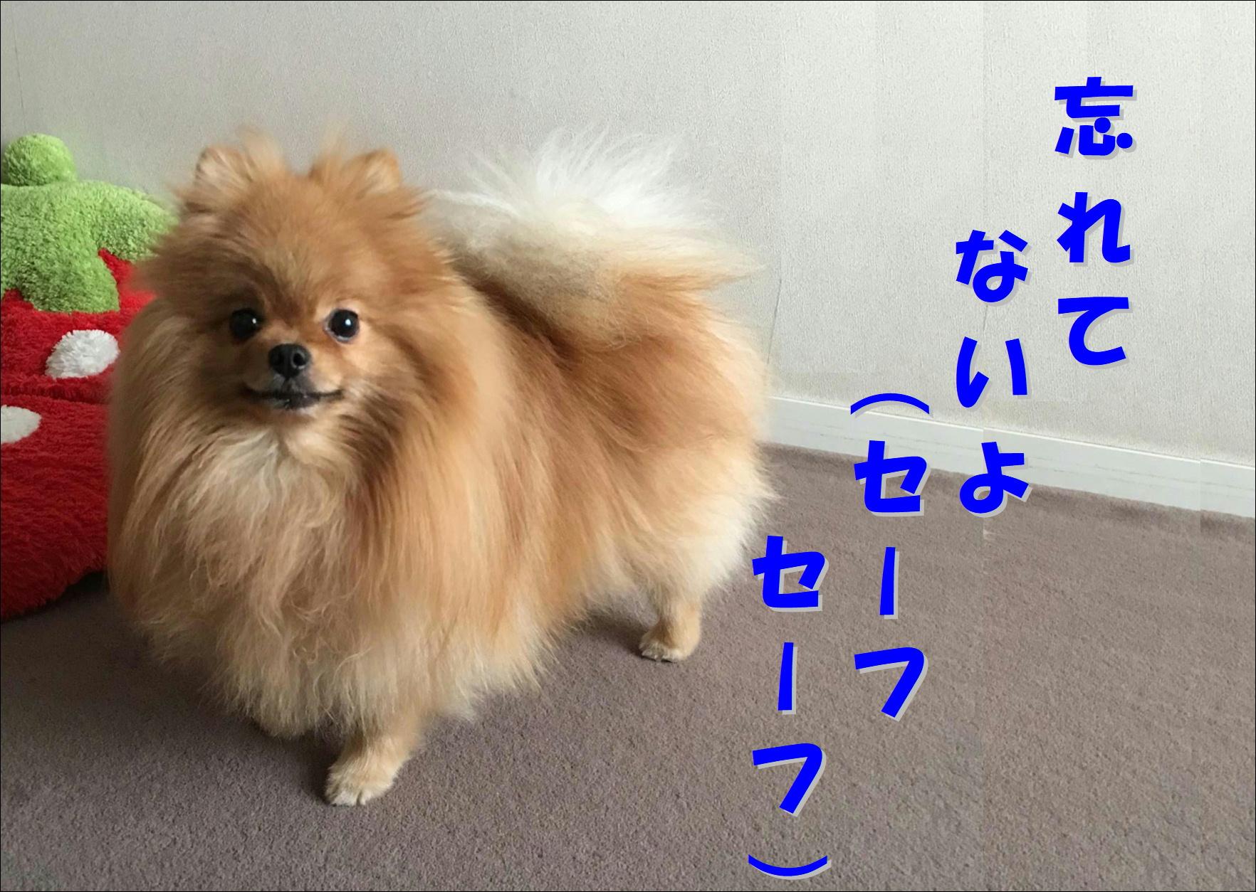 blog20180422_05.jpg