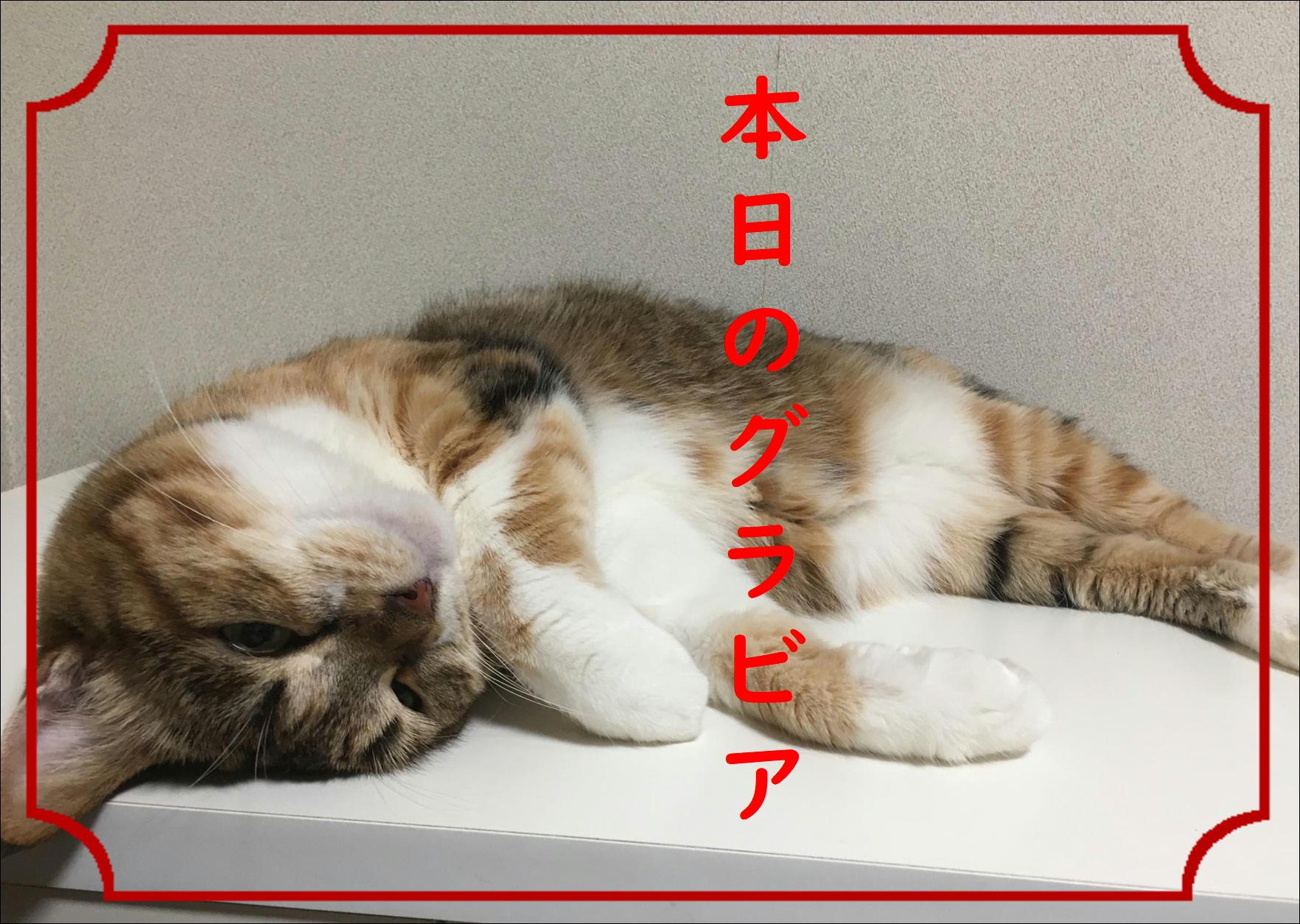 blog20180814_01.jpg