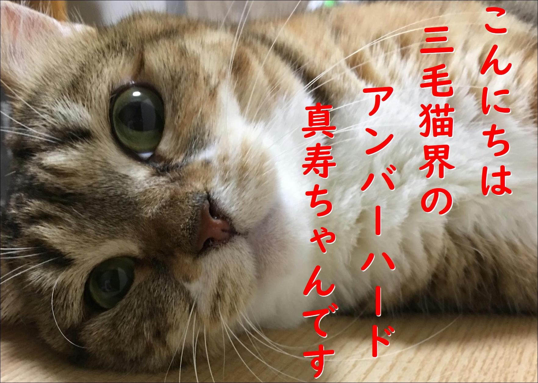 blog20180814_02.jpg