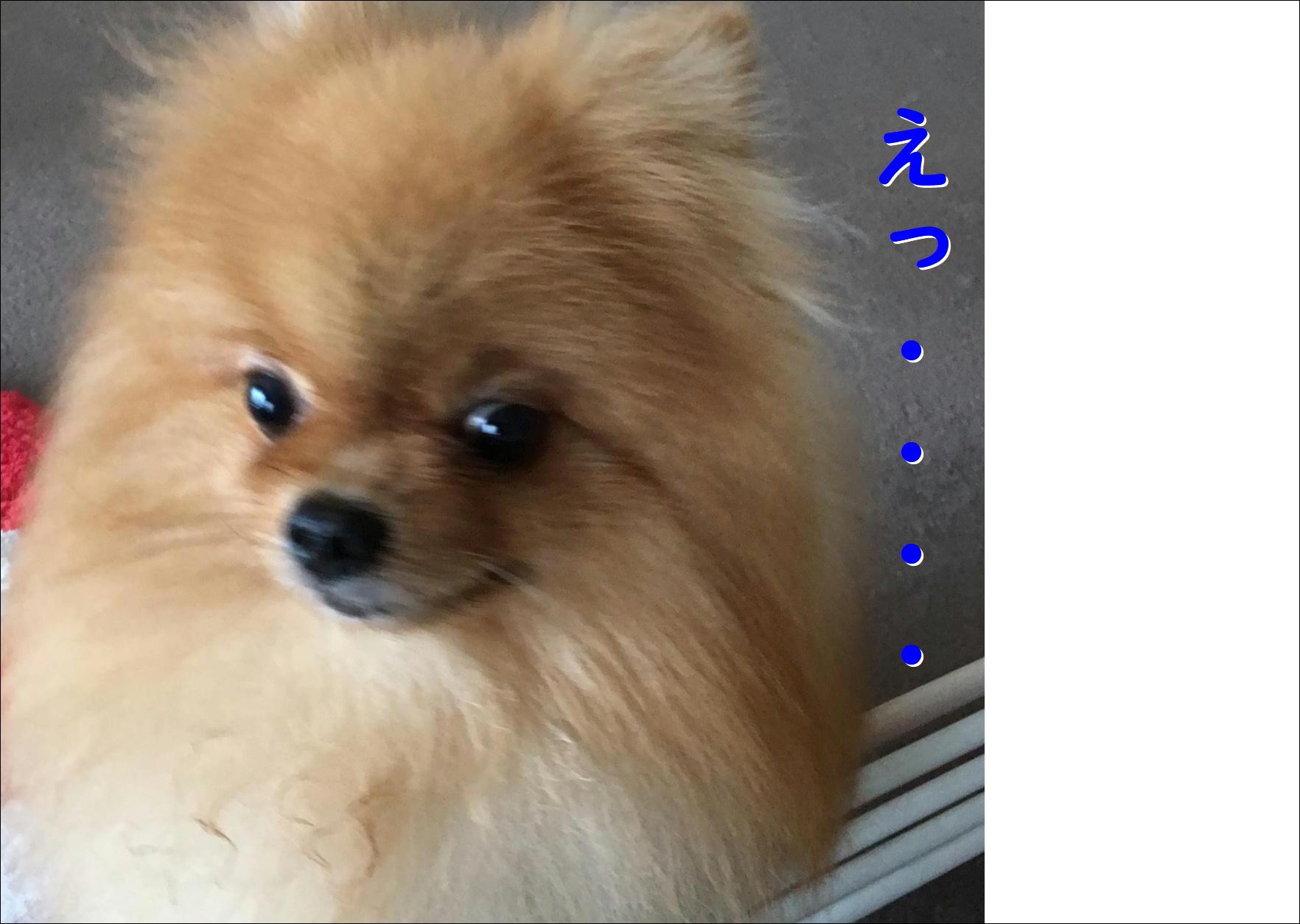 blog20180814_03.jpg