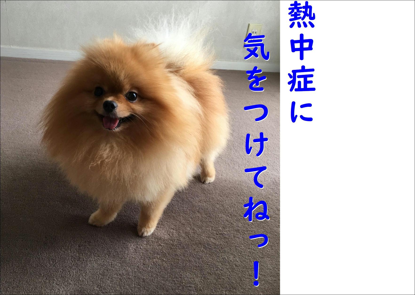 blog20180814_04.jpg