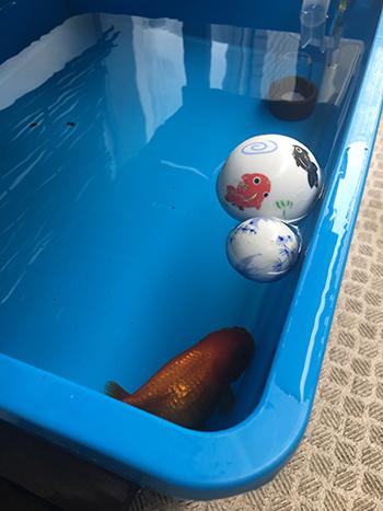 金魚避暑地へ