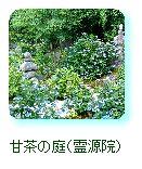 甘茶の庭(霊源院)
