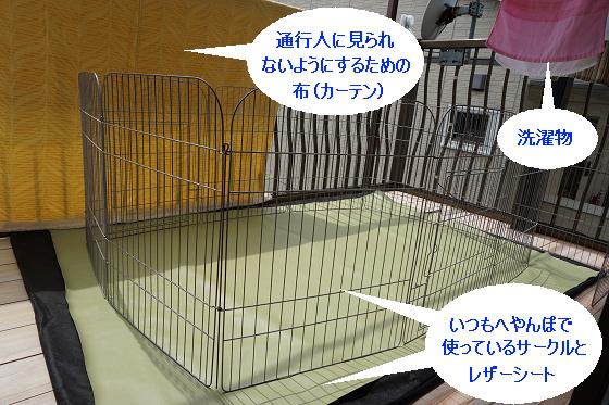 ぴょん子180409_01