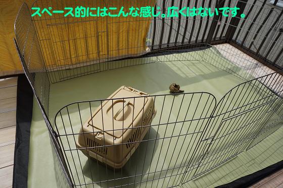 ぴょん子180409_02