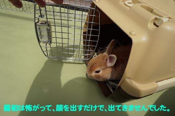 ぴょん子180409_03