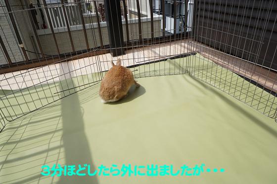 ぴょん子180409_04