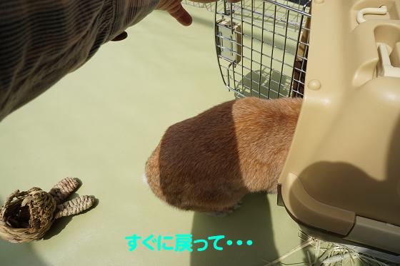 ぴょん子180409_05