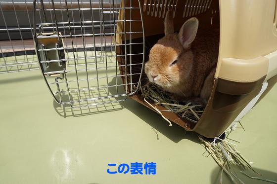 ぴょん子180409_06