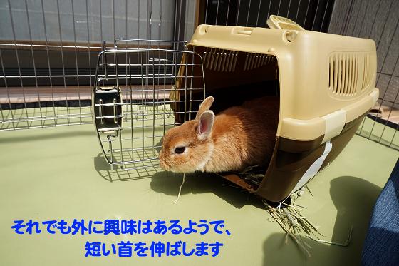 ぴょん子180409_07