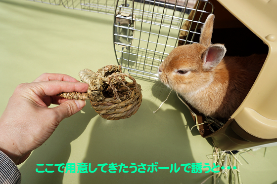 ぴょん子180409_08