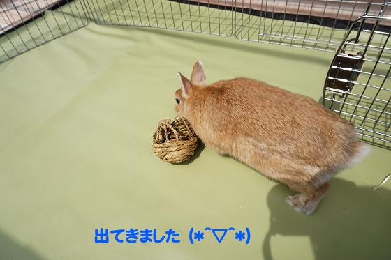 ぴょん子180409_09