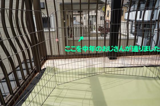 ぴょん子180409_16