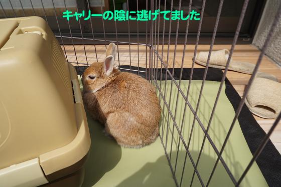 ぴょん子180409_17