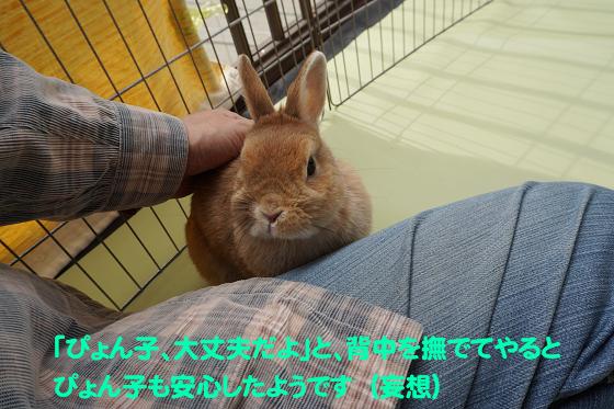 ぴょん子180409_18